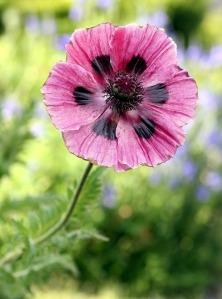 flower-1362855_640